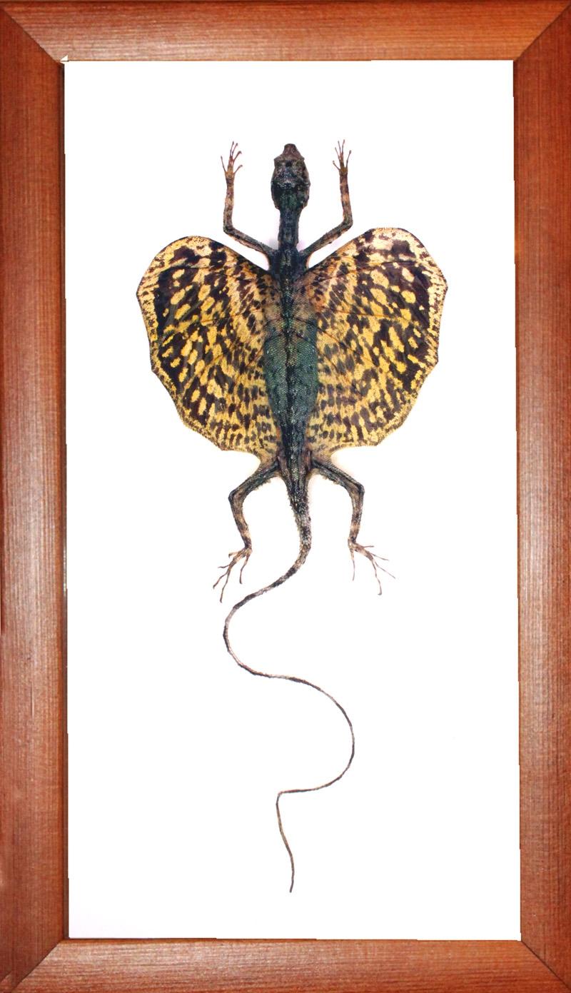 Ящерица дракон (желтый)